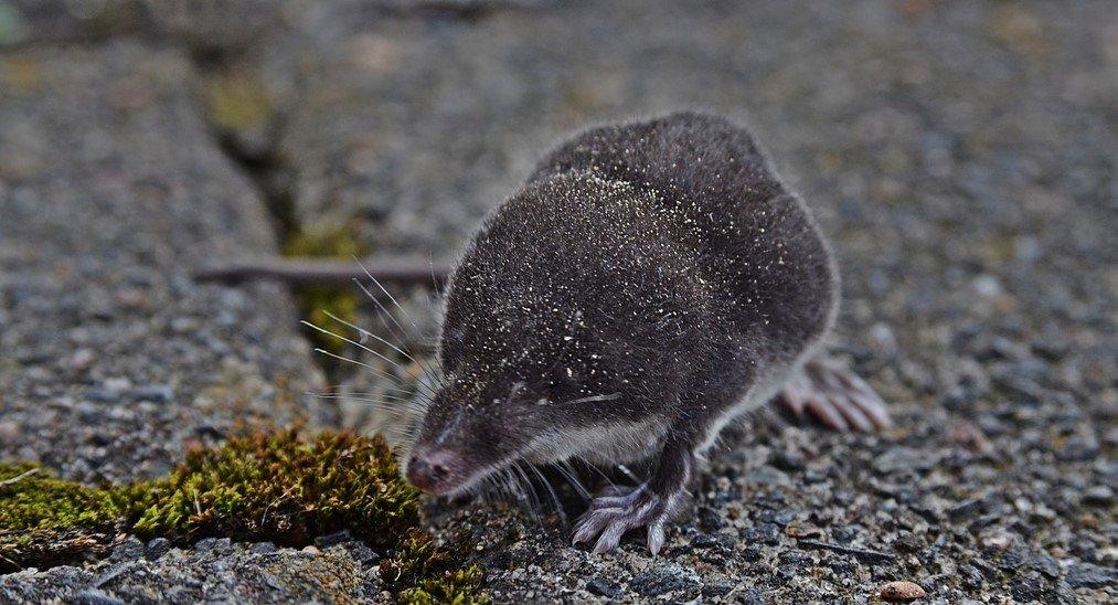 Eine Maus kommt selten allein